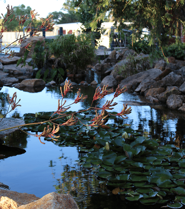 pond with lili - Landscapes For Life