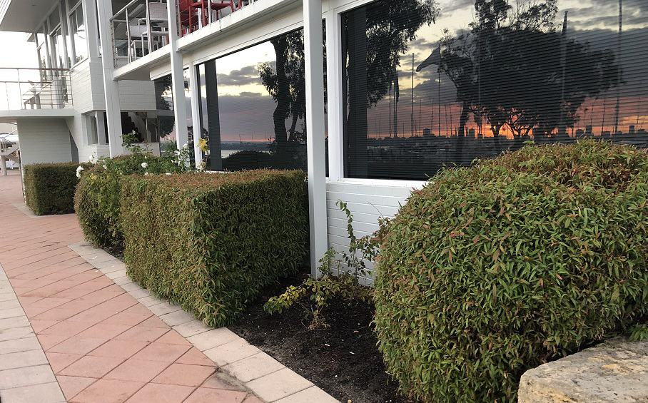 trimmed hedges at Royal Perth Yacht Club